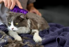 Cat Grooming And Bonding Tips