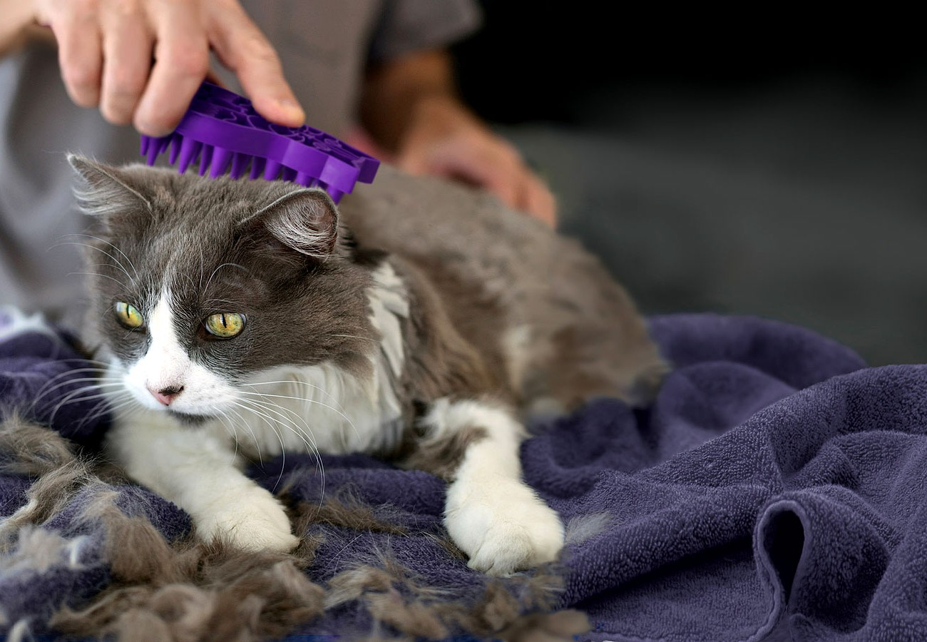 Cat Grooming And Bonding Tips Life As A Pet