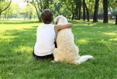Top 3 Tips on How to Bond With Your Dog